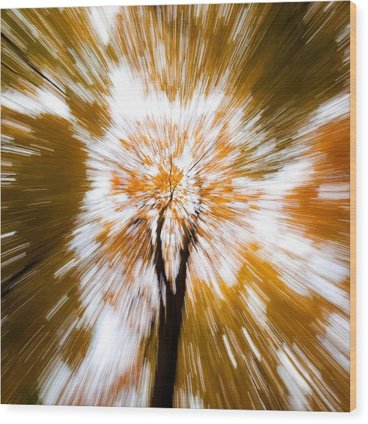 Autumn Explosion Wood Print