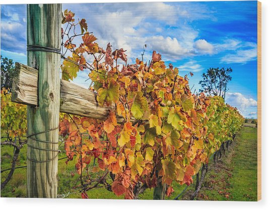 Autumn Falls At The Winery Wood Print