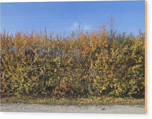 Autumn Fence Wood Print by Aleksandr Volkov
