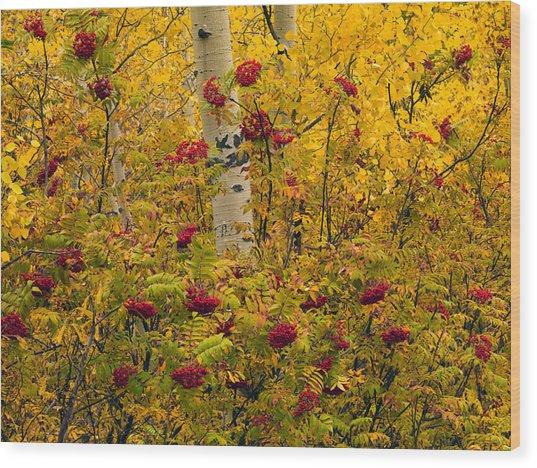 Autumn Forest Colors Wood Print