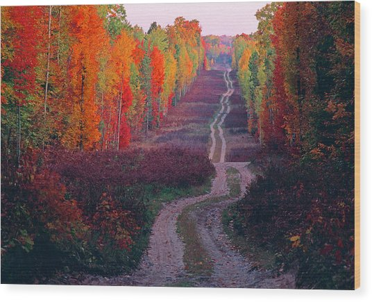 Autumn Forest Road Wood Print