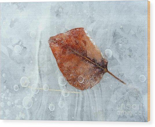Autumn Frozen Wood Print