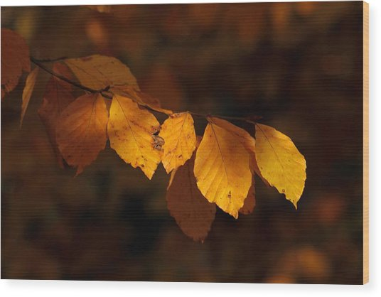 Autumn Gold Wood Print by Peter Skelton