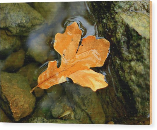Wood Print featuring the photograph Autumn Gold by Viviana  Nadowski