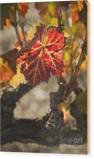 Autumn Grape Leaves Wood Print by Charmian Vistaunet