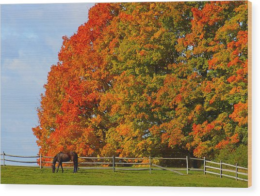 Autumn Grazing Wood Print