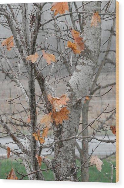 Autumn Grey Wood Print by Margaret McDermott