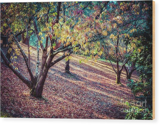 Autumn Grove Wood Print