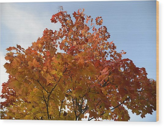 Autumn Harmony 1 Wood Print