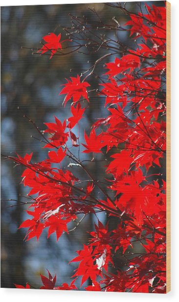Autumn In Red Wood Print by Les Scarborough