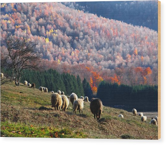 Autumn In Romanian Mountains Wood Print