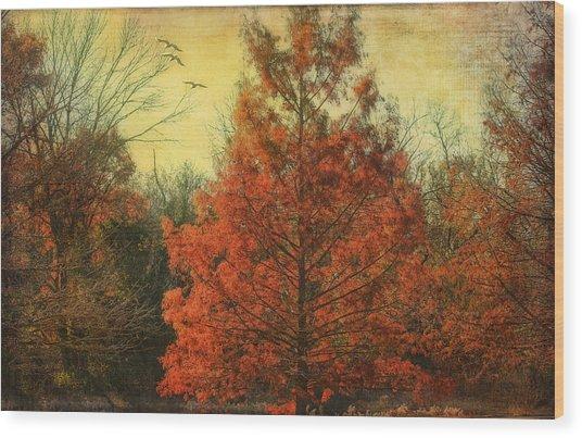 Autumn In Texas Wood Print