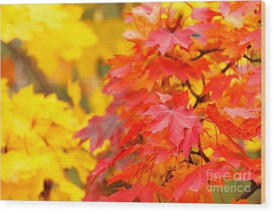 Autumn Is Beautiful Wood Print