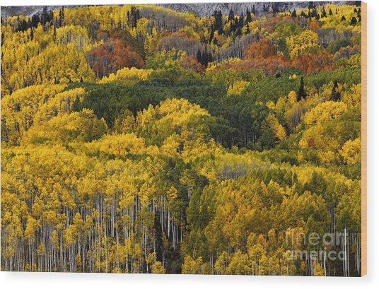 Autumn Kaleidoscope Wood Print