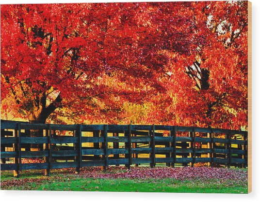 Autumn Kentucky Maples Wood Print