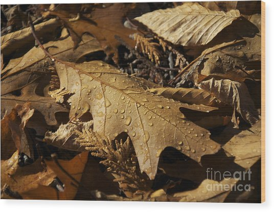 Autumn Leaf At Dawn Wood Print