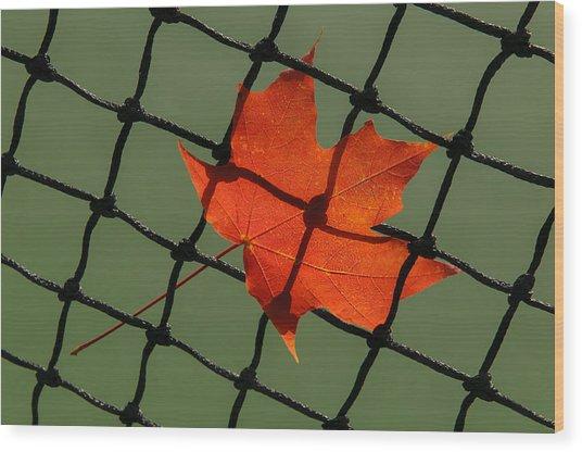 Autumn Leaf In Net Wood Print