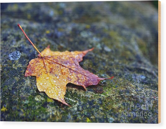 Autumn Leaf On Rocky Ledge Wood Print