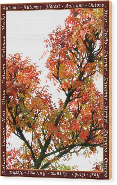 Autumn Leaves 3 Wood Print