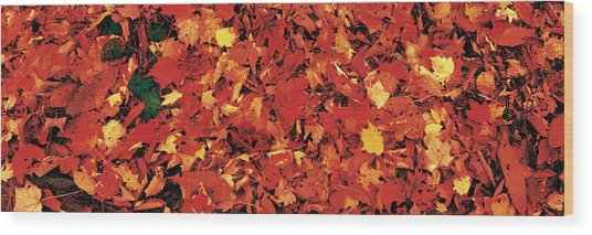 Autumn Leaves Great Smoky Mountains Wood Print