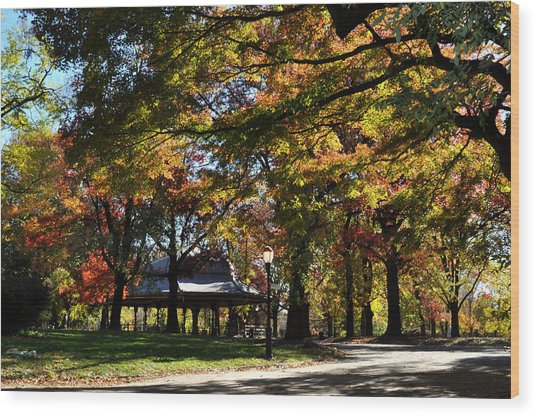 Autumn Leaves In Prospect Park Wood Print