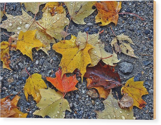 Autumn Leaves In Rain Wood Print