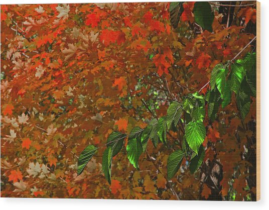 Autumn Leaves In Red And Green Wood Print