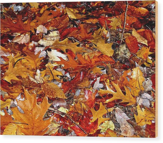 Autumn Leaves On The Ground In New Hampshire - Bright Colors Wood Print