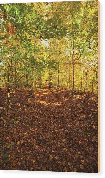 Autumn Leaves Pathway  Wood Print
