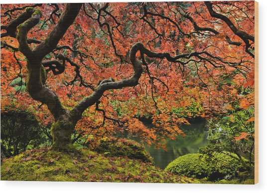 Autumn Magnificence Wood Print