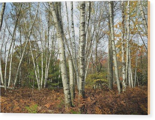 Autumn Majesty - Marion Brooks Natural Area Wood Print
