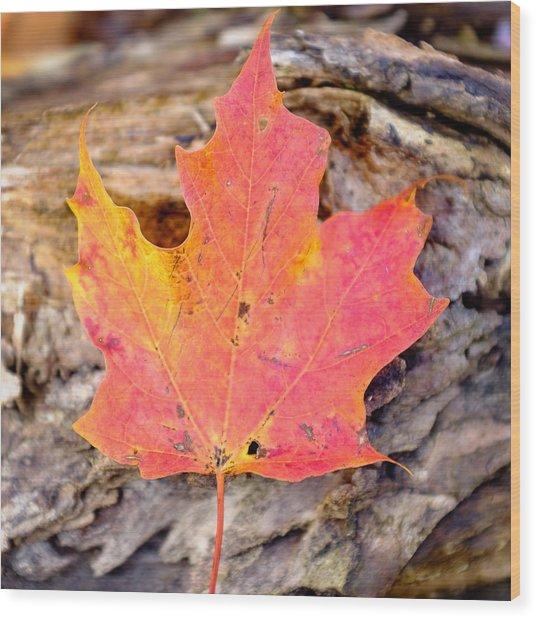 Autumn Maple Leaf On A Log Wood Print