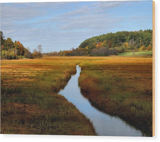 Autumn Marsh Wood Print