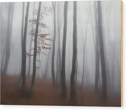Autumn' Mist Wood Print