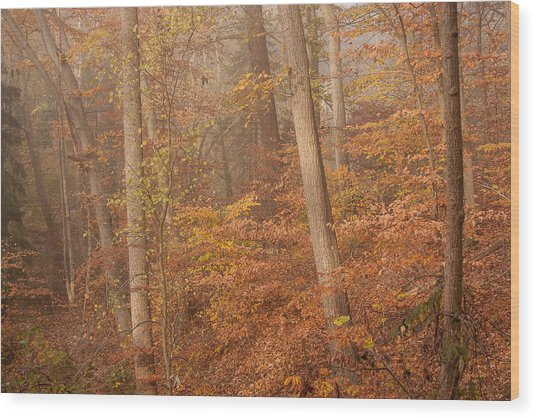 Autumn Mist Wood Print