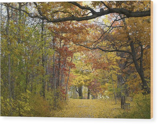 Autumn Nature Trail Wood Print
