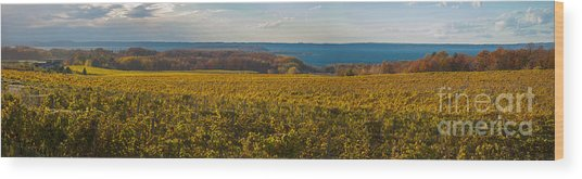 Autumn On Old Mission Peninsula Panoramic Wood Print
