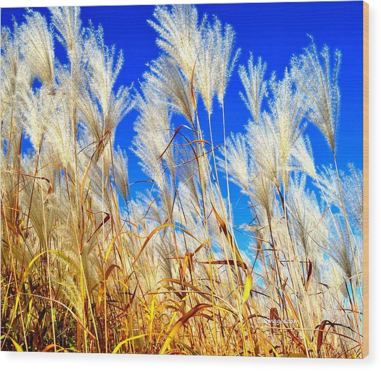 Autumn Pampas Wood Print