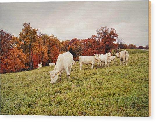 Autumn Pastures Wood Print