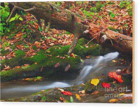 Autumn Paths Wood Print