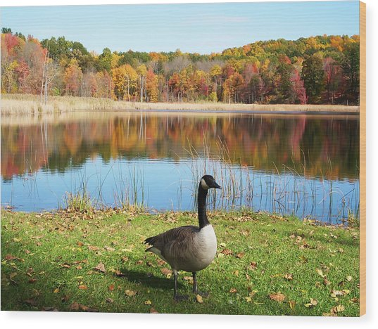 Autumn Pond Goose Wood Print