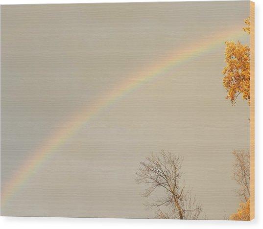 Autumn Rainbow Wood Print by Cim Paddock
