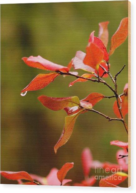 Autumn Raindrop Wood Print