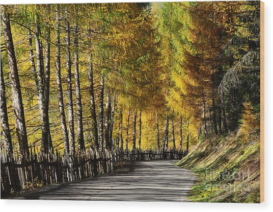 Winding Road Through The Autumn Trees Wood Print