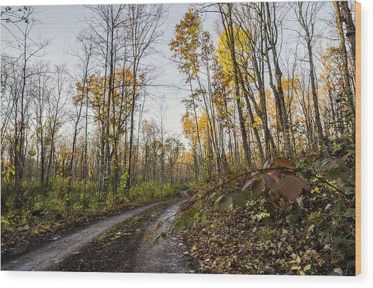 Autumn Road Wood Print by Paul Geilfuss