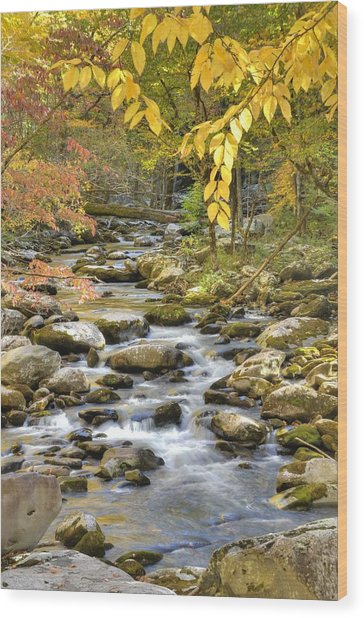 Autumn Serenity Wood Print by Mary Anne Baker