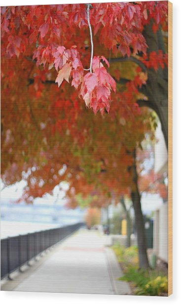 Wood Print featuring the photograph Autumn Sidewalk by Viviana  Nadowski