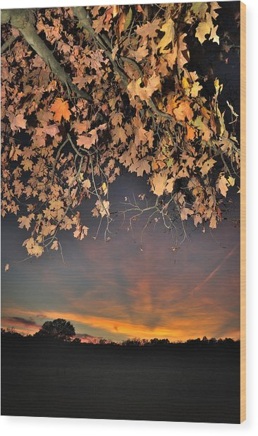 Autumn Sky And Leaves 1 Wood Print