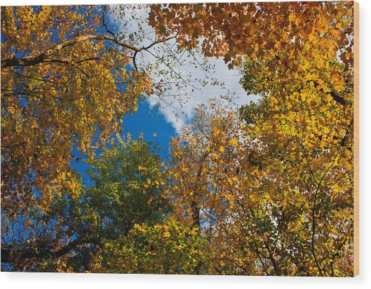 Autumn Sky Wood Print by Claus Siebenhaar