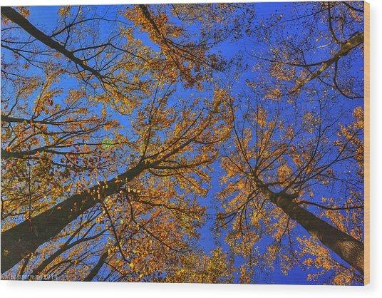 Autumn Sky Wood Print by Kathi Isserman
